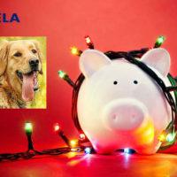 Желтая Свинка готовится принять эстафету у уходящей Желтой Собаки